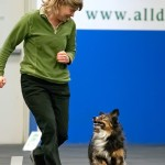 Rally-O Training with your dog