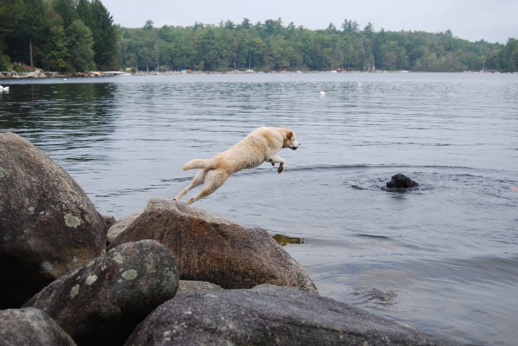 Cooper Jumping