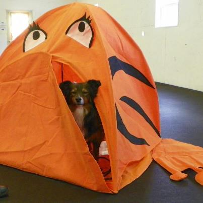 Spark in Sniff It tent