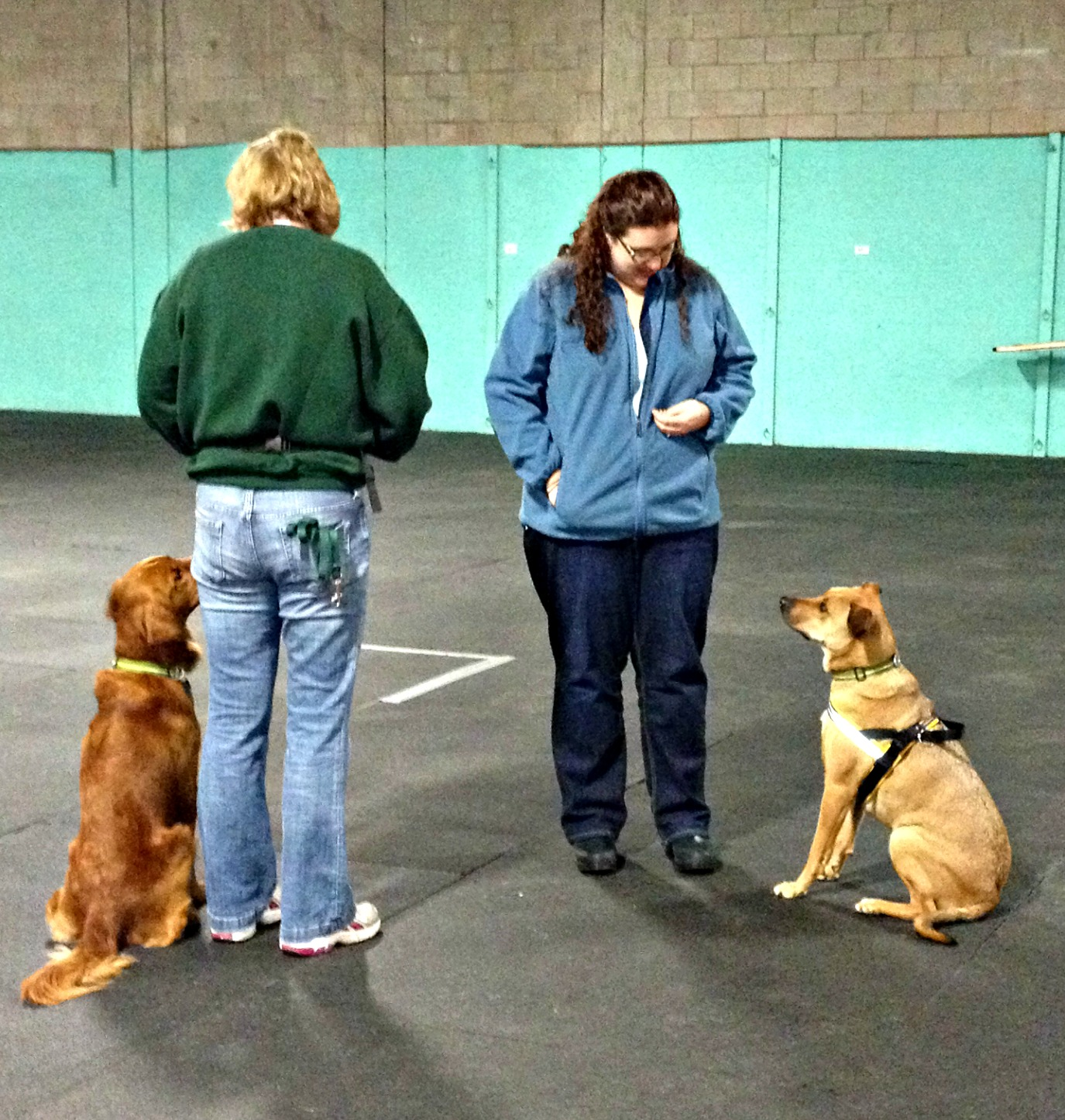 off-leash meet and greet
