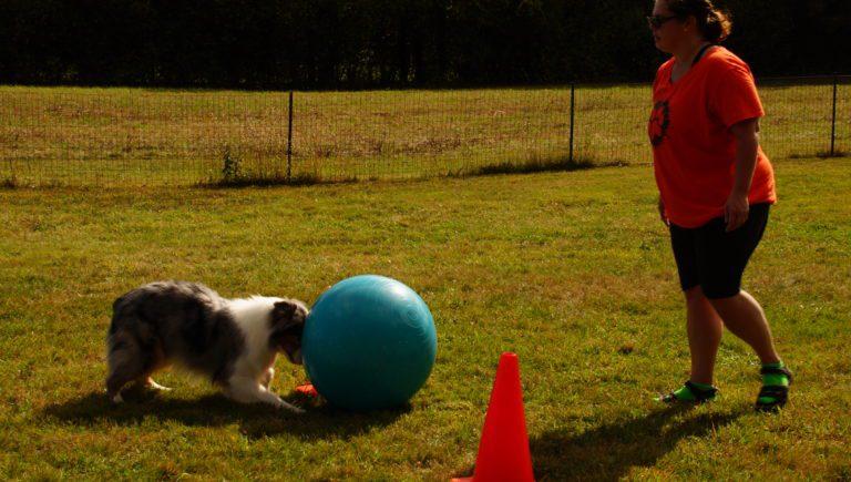dogball Chrissy